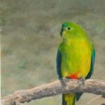 Orange-bellied Parrot 60 x 90 mm
